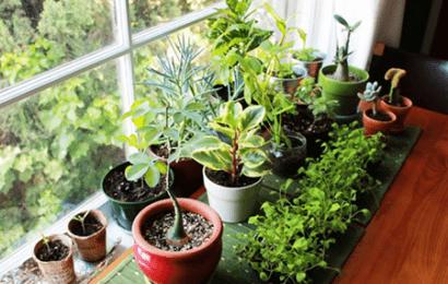 Evde Çiçek Bakımı Nasıl Yapılır